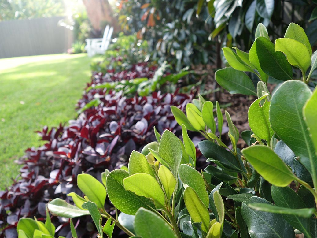 garden landscape design mosman